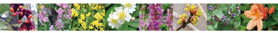 飯綱高原の花々